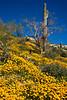Arizona - Spring