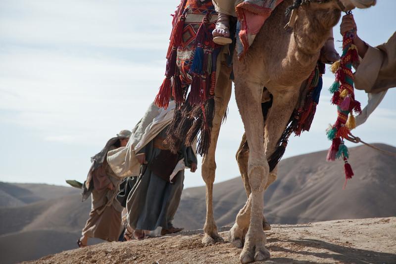 Camel Crossing - Israel desert