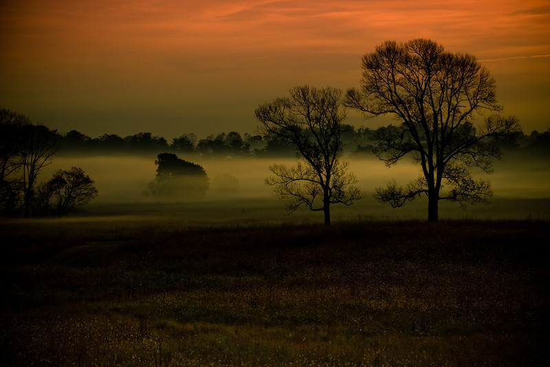 Dawn Mist