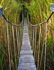 Rope Bridge in Sandwich
