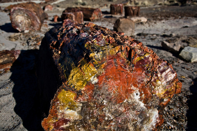 Petrified Forest - AZ