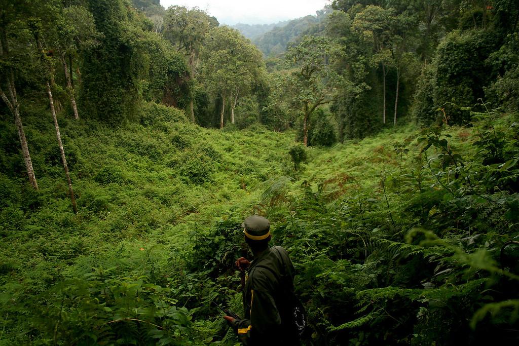 A ranger checks his charge<br /> <br /> Nyungwe NP, Rwanda