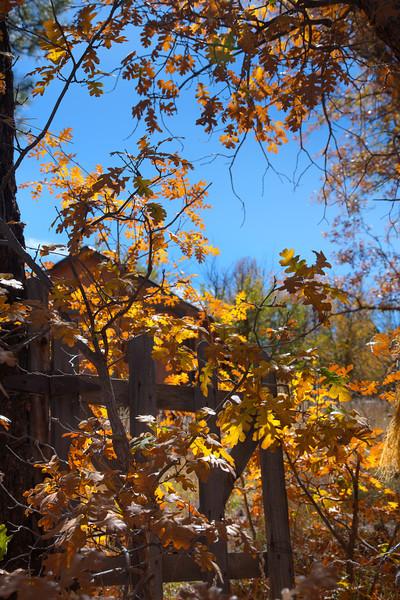 Arizona - Fall