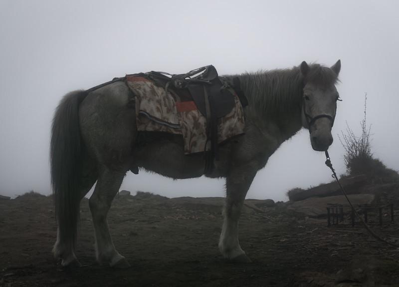 horse in clouds
