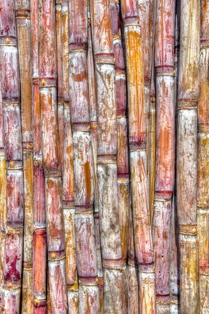 Madeira: Sugar Cane