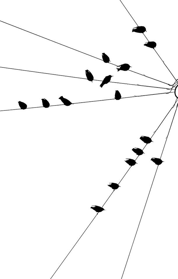 Birds2-1106521571-O