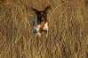 Wild dog. Riemy running near Lake Ray Hubbard (Jan 2007)