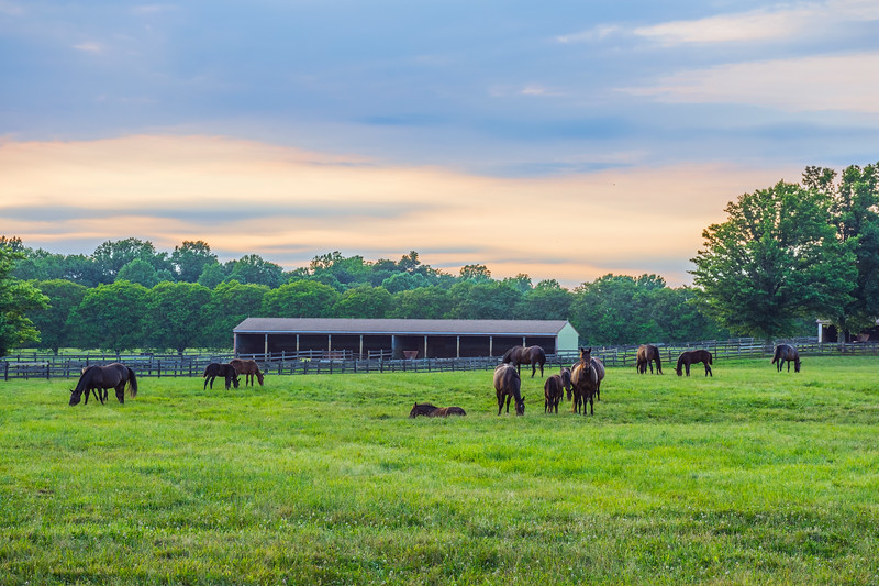 Horses at Twilight