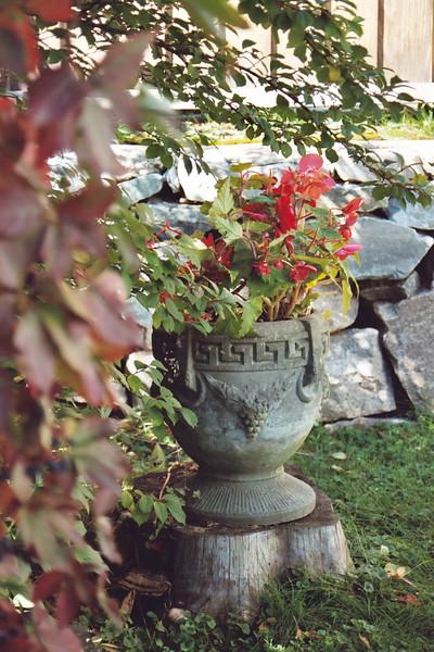 Begonias, Berlin, New Hampshire