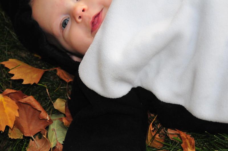 Penguin Magnolia, Halloween 2008