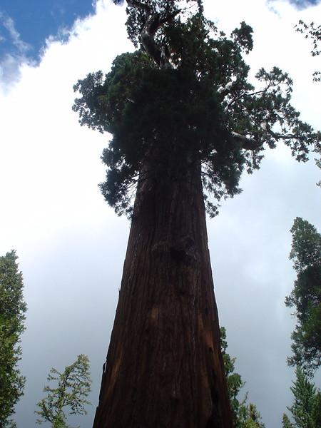 General Sherman Tree, Sequoia National Park, California, 2004