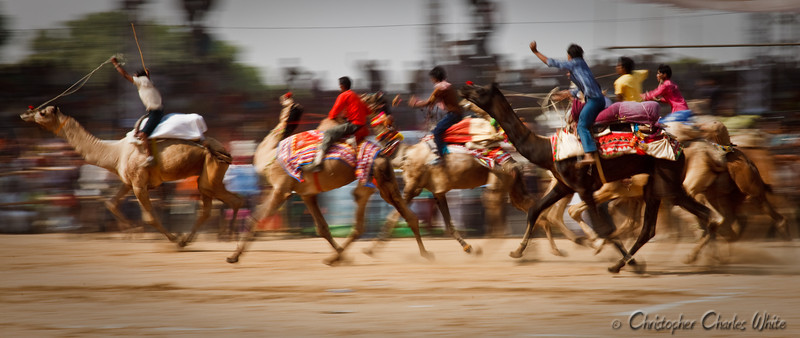 Camel Race Pushkar, India