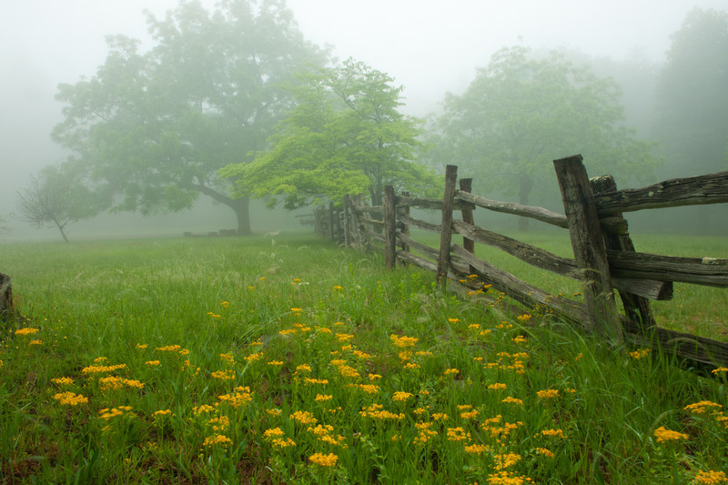 Fence line and wildflowers at Humpback Rocks Visitor Center, MP 5.8