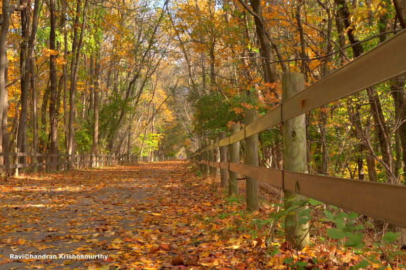 Fall in Valley Forge - Trail by 422