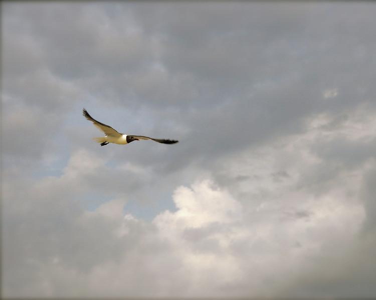 Spirits soar