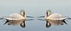 18 x 8bookend swans