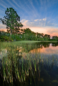 Summer sunset on Lake Annie, one of the oldest and deepest lakes on the Lake Wales Ridge, in south-central Florida