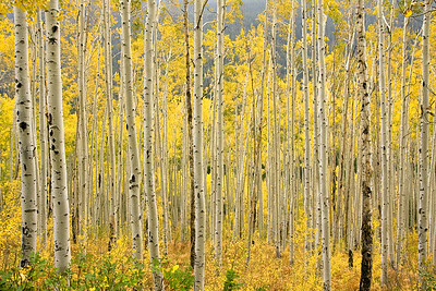 Aspen Grove, Independence, Colorado