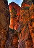 """Tree on Cliff"" Virgin River Narrows - Zion National Park - Utah"