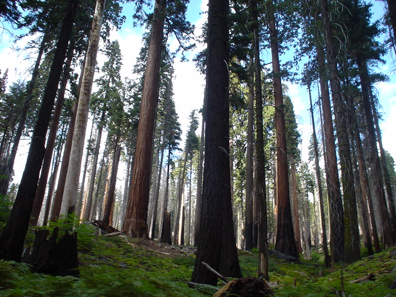 Sequoia National Forest, California, 2004