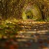 Fall Corridor