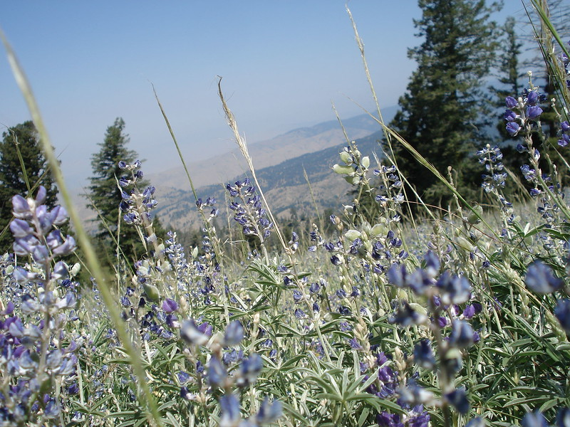 Wildflowers, Schaffer Butte, Idaho, 2007