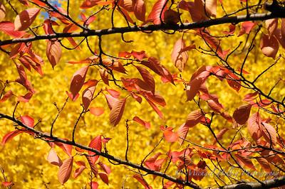 Kyoto Koyo - autumn