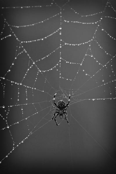 spider&webTIFF