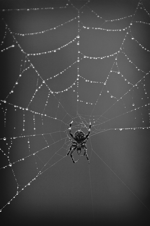spider&webTIFF