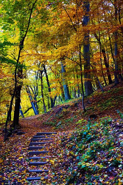 Wernigerode Steps