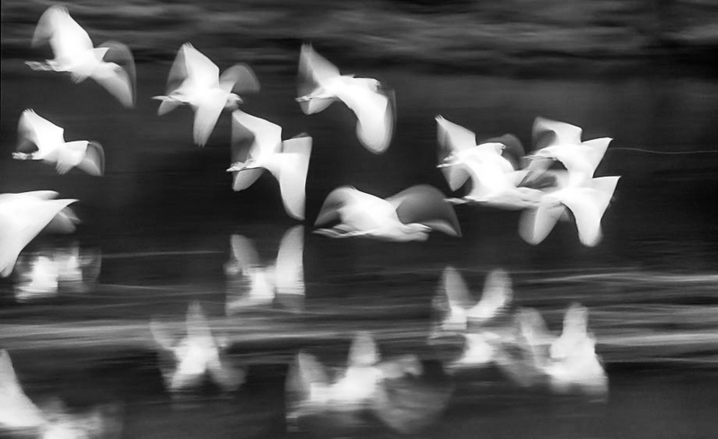 Birds in motion on the upper Amazon River, Peru