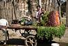 Produce vendor in Cairo