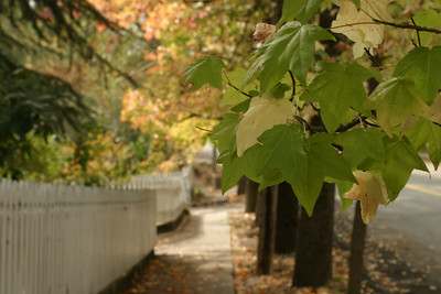 A Nevada City California walkway on a beautiful fall day.