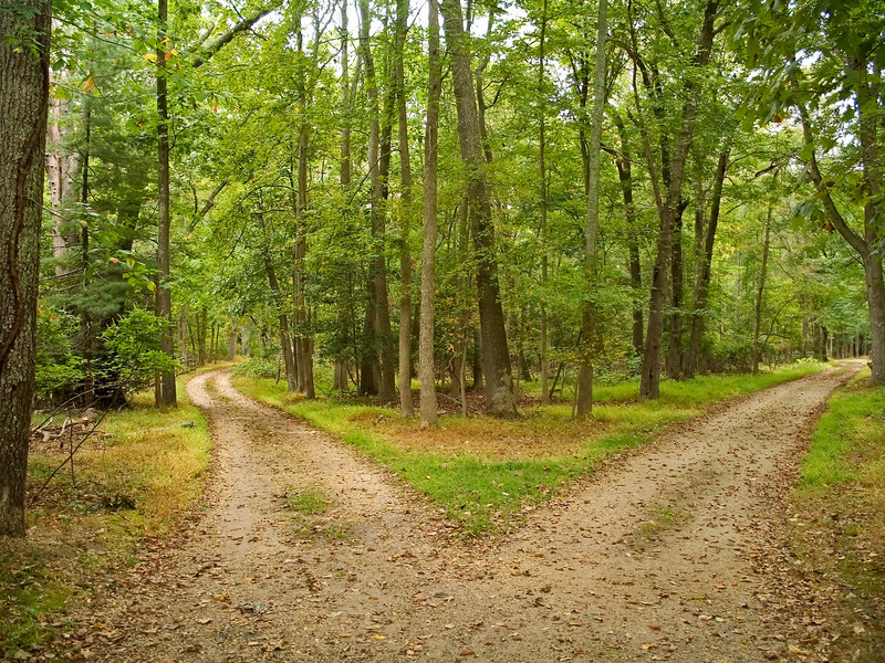"""""""Two Paths""""<br /> Two Paths in the Summer woods of New Jersey."""