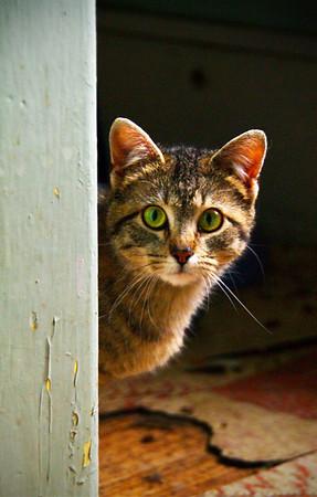 Abandoned Cat