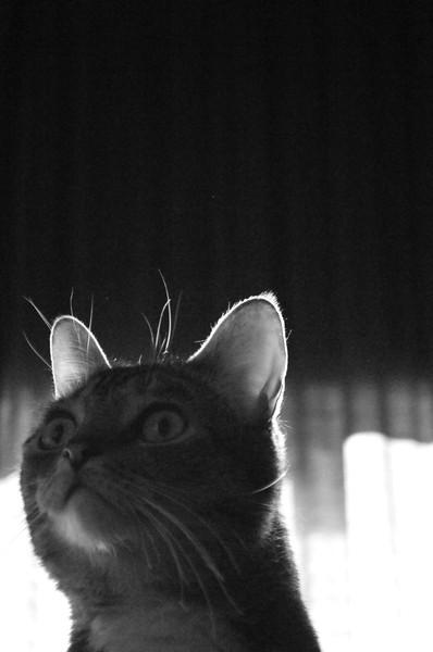 Sapphire the cat, 2008