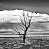 Lone Tree north of Taos, New Mexico
