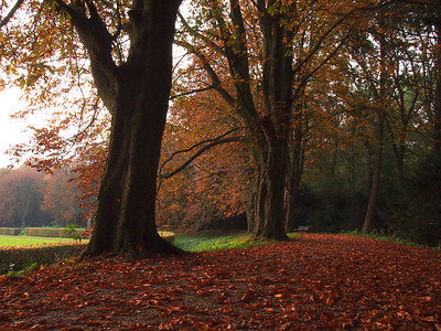 Amsterdamse Bos besloten deel