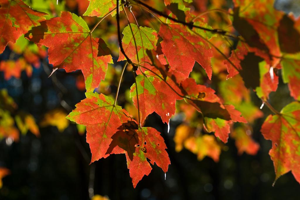 Fall In Massachusetts