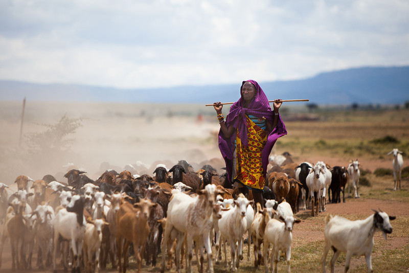 Masai Herdsman