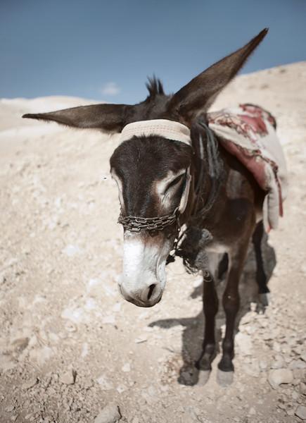 Israel - Negev Desert