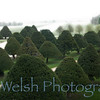 Hampton Court Palace  © Copyright  Ken Welsh