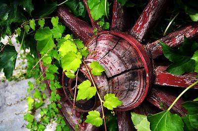 Italian Vineyard Wheel