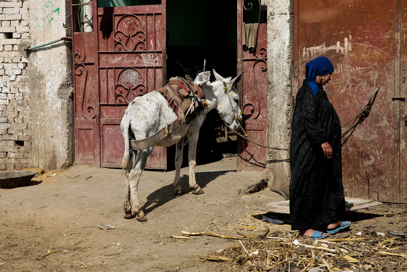 Muslim woman and Donkey - Cairo