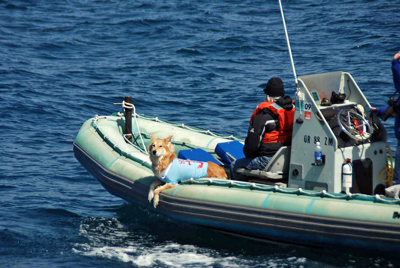 Another whale watching tour, on a zodiac, carries a mascot onboard.