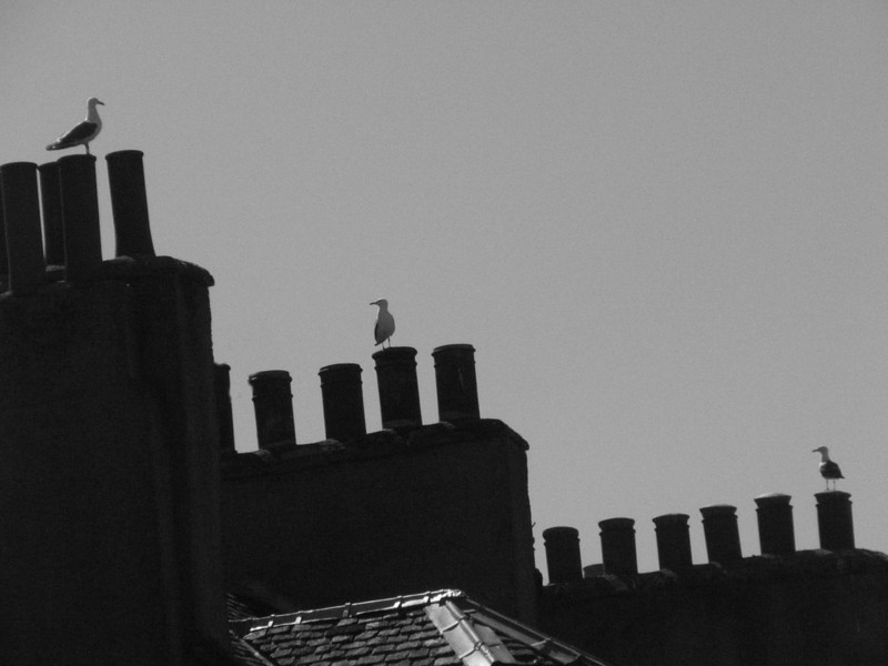 Scotland Roof Tops