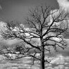 212 Tree