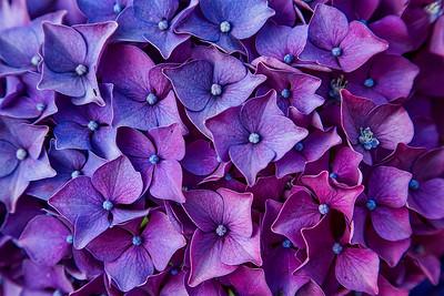 Preety in Purple