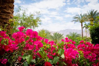 Jordan flowers