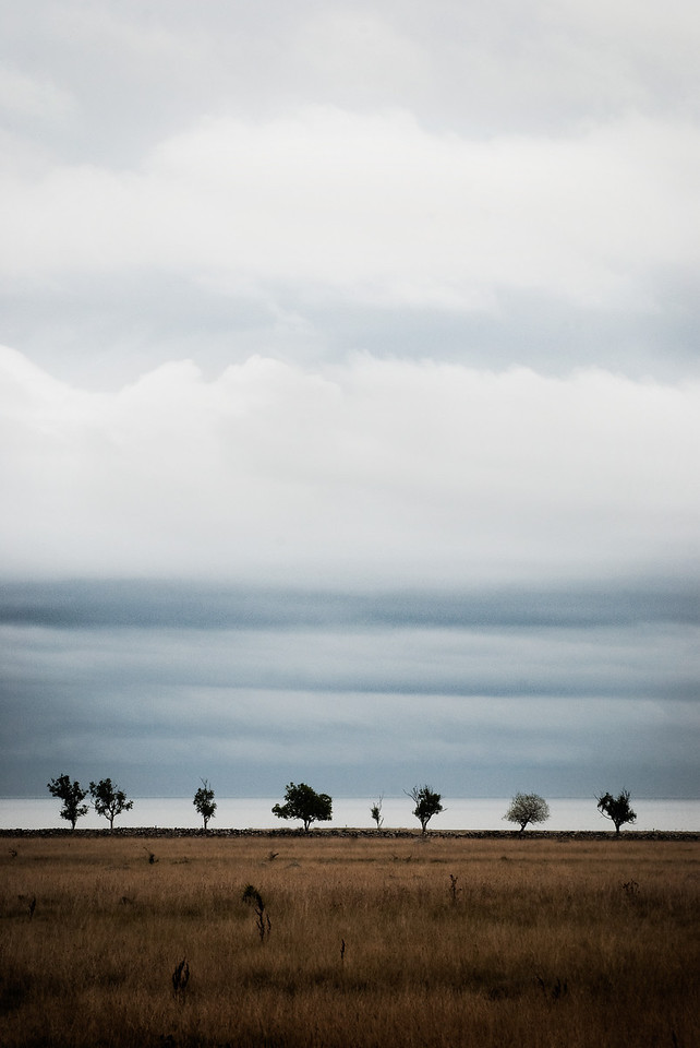 Trees at the horizon, Öland, Sweden